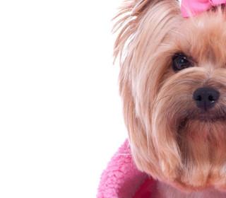 Seaton Dog Grooming 4