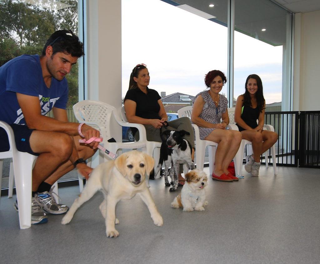 Seaton Puppy Centre - Puppy Preschool 5