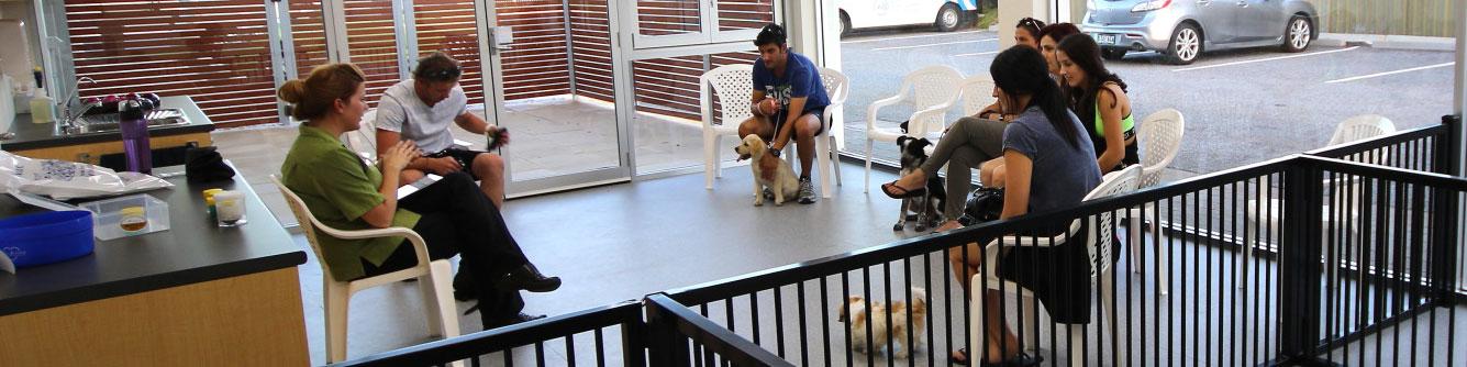 Seaton Puppy Centre – Puppy Preschool