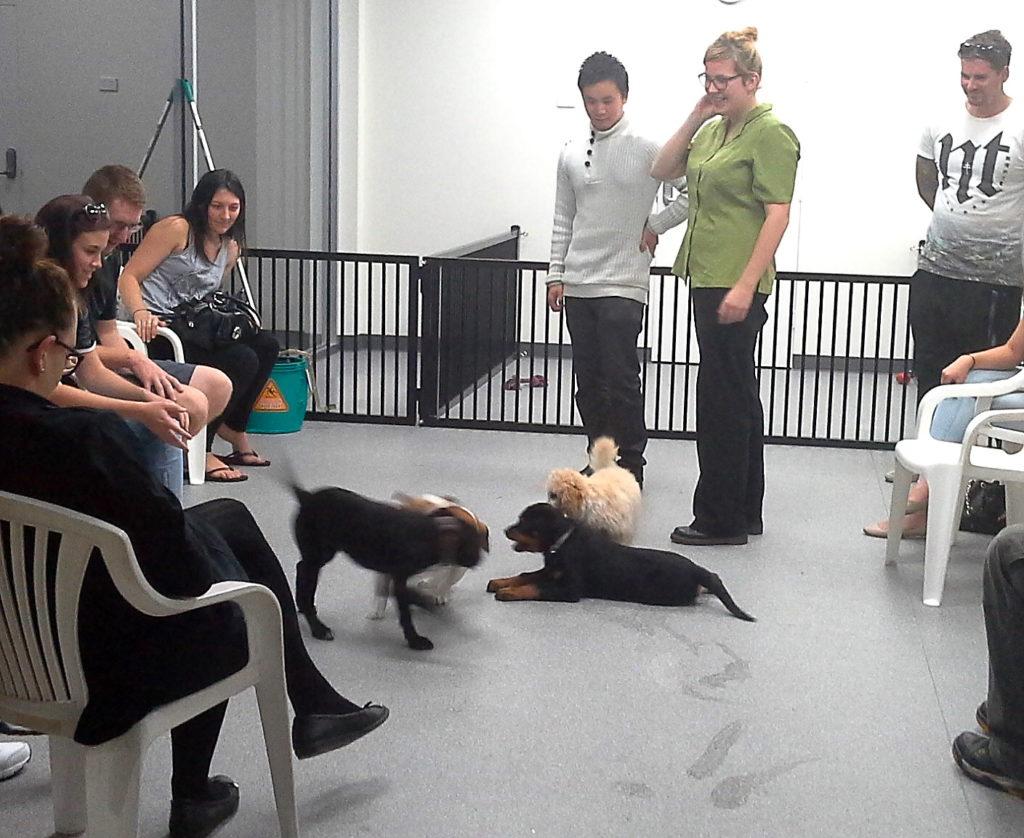 Puppy Socials 1