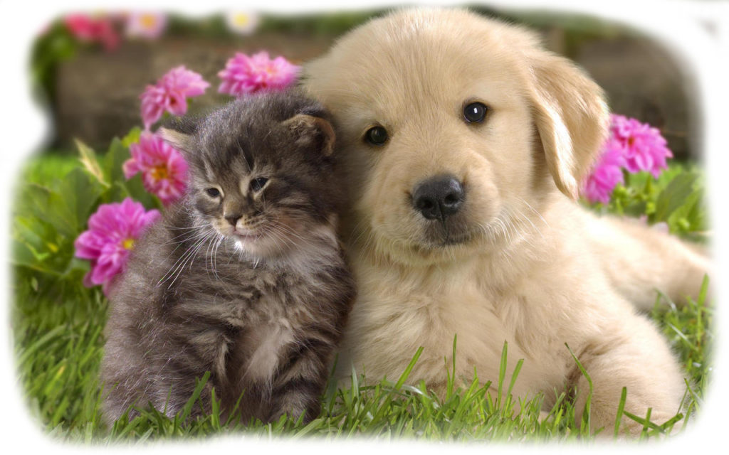 Puppy and Kitten Care 1