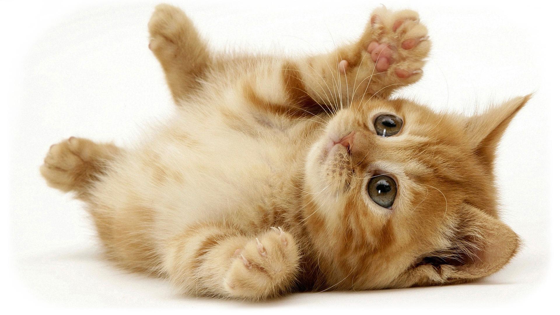 Free Kitten Health Check Western Suburbs Adelaide Vet