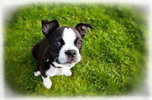 Vaccinations for Puppies and Dogs 1