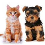 Free Benefits for Desexing Your Pet 1