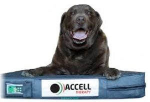 Accell Therapy 2