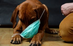 Puppy with surgical mask
