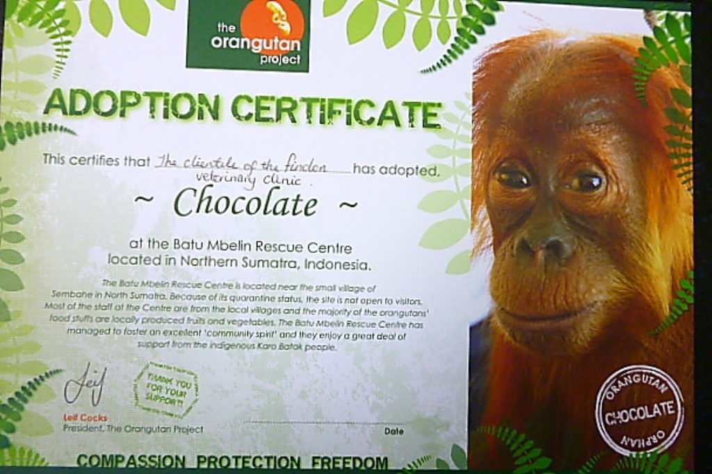 Findon Vet and the Orangutan Adoption Project 7