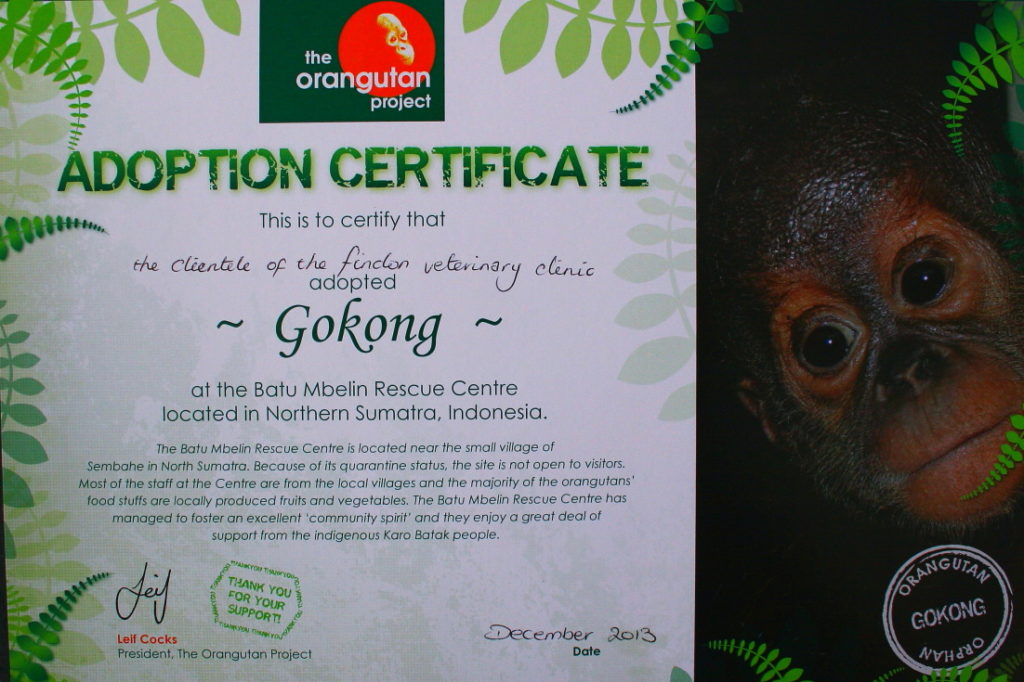 Findon Vet and the Orangutan Adoption Project 4
