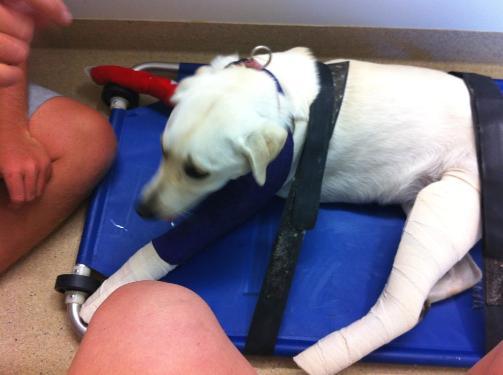 Miss Coba Tunn, Escape Artist Breaks Both Her Left Legs! 8