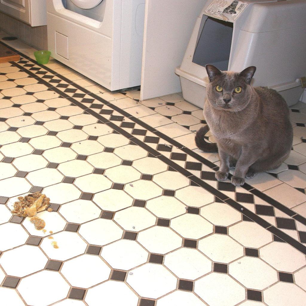 Cat Burglar Unmasked! 2