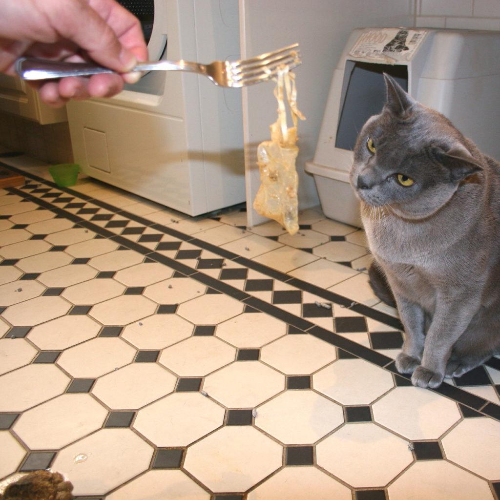Cat Burglar Unmasked! 3