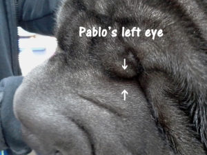 Pablo can SEE!!! 2