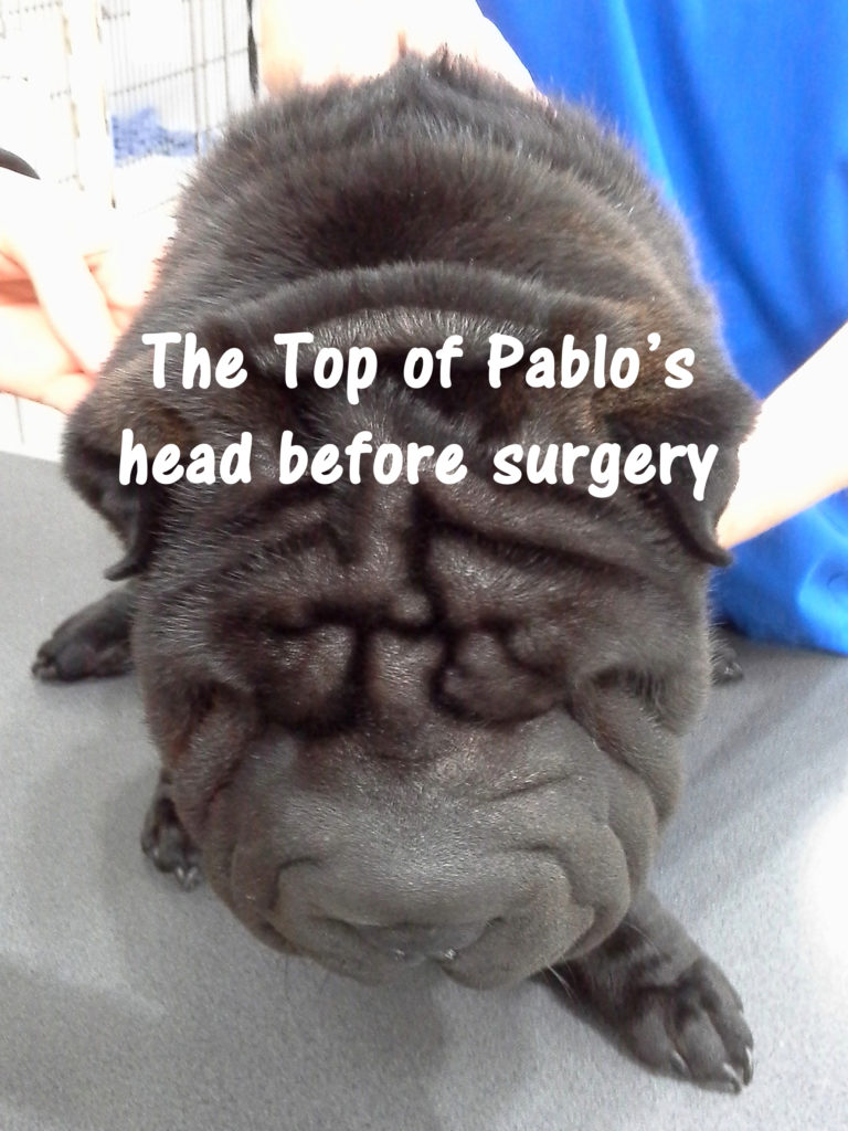 Pablo can SEE!!! 3
