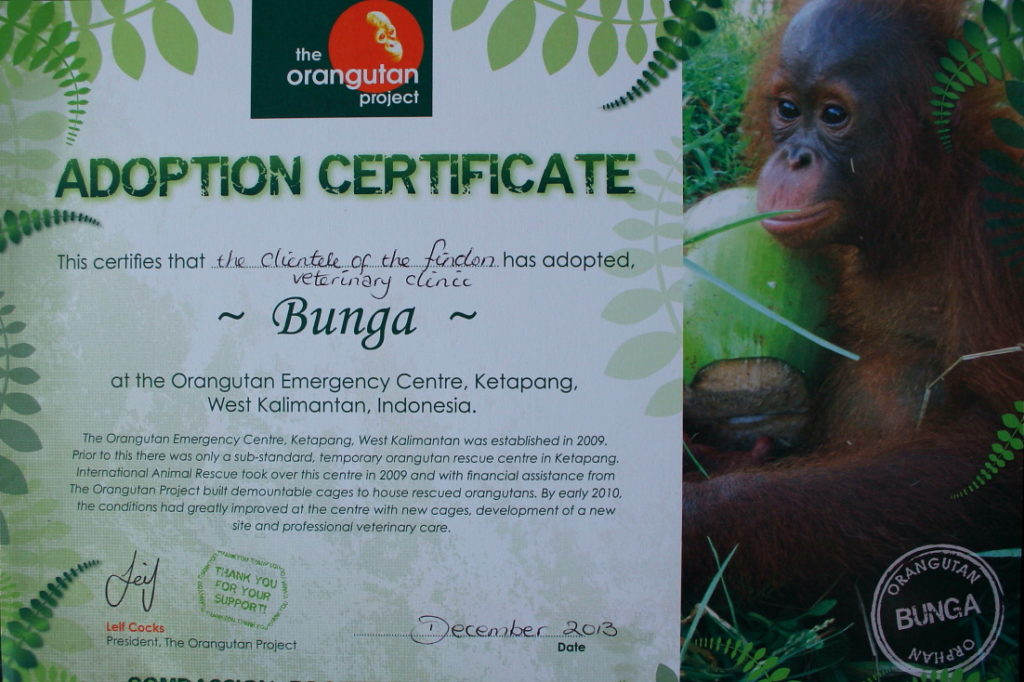 Findon Vet and the Orangutan Adoption Project 3