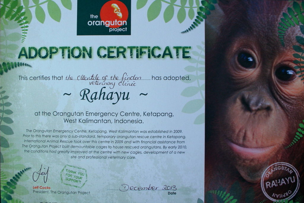 Findon Vet and the Orangutan Adoption Project 5